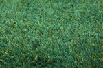 Esprit NEW GLAMOUR - ESP-3303-17[gaat uit de collectie] Groen